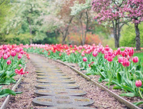Timeless Landscaping Styles for Your Garden This Summer