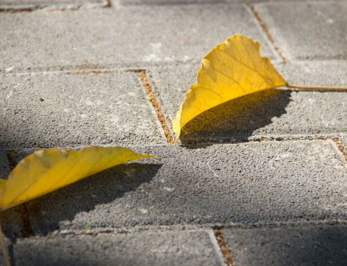 What Are Permeable Pavers and What Makes This A Green Choice?