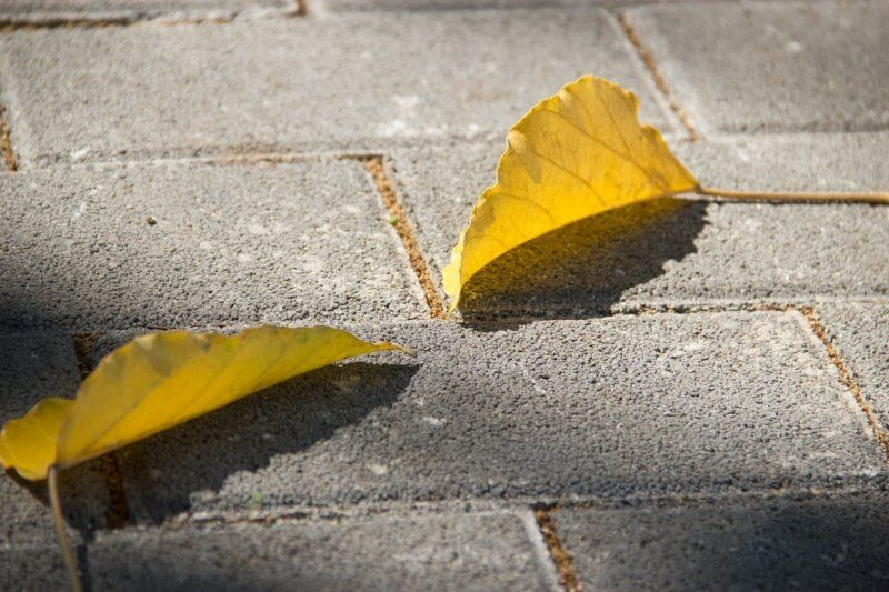 Close up shot of two yellow leaves sitting atop permeable concrete pavers
